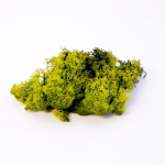 FINLAND MOSS OLIVE